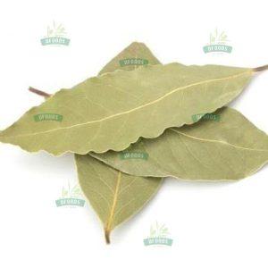 Lá nguyệt quế - Bay Leaf