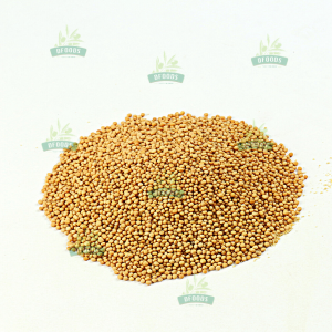 Hạt mù tạt vàng - Mustard Seed Yellow