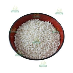 Hạt Sago - Sago seed